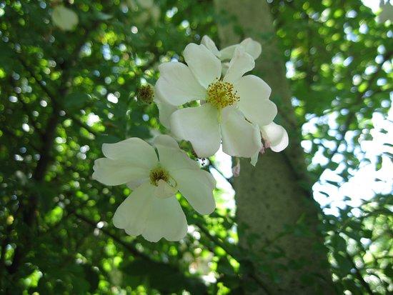 Il parco delle rose - orto-roseto Garlant Fabiani