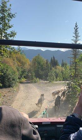 Tagish, Canada: Cart ride