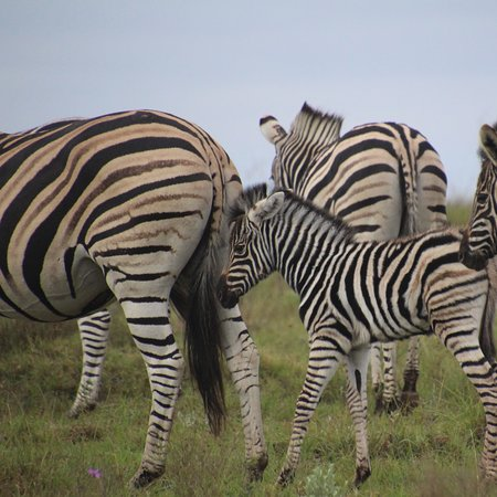 Beautiful animals seen in their natural habitat at the Lalibela Game Reserve.