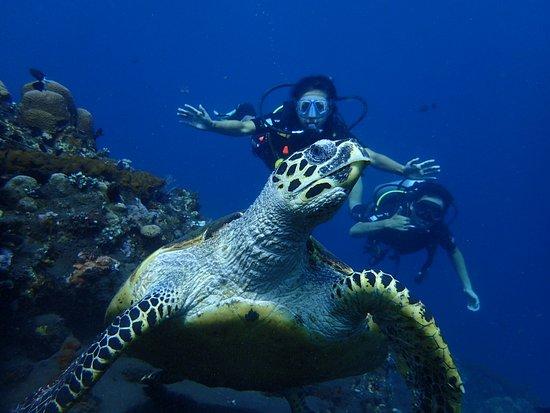 Tulamben, Indonesië: Woww big sea turtle