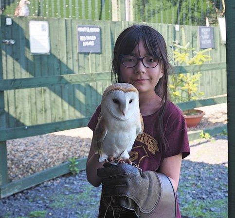 Cinder the baby Barn Owl