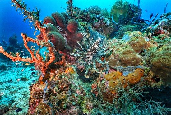 Maumere Dive Journey