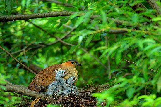 Cuc Phuong National Park Trekking ...