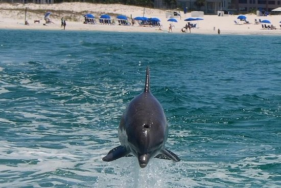 Dolphin-Watching Cruise in the Gulf...