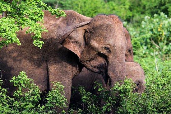 ディクウェラからのウダワラウェ国立公園プライベートサファリ