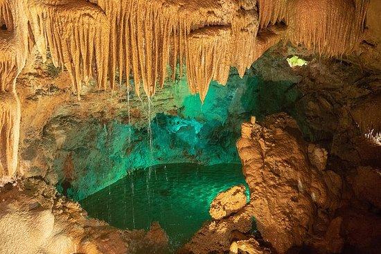 儿童洞穴和恐龙,私人体验,全天