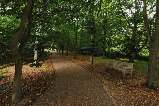 wooded walk