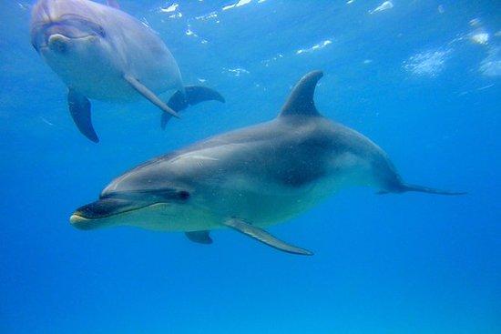 海豚自然巡游