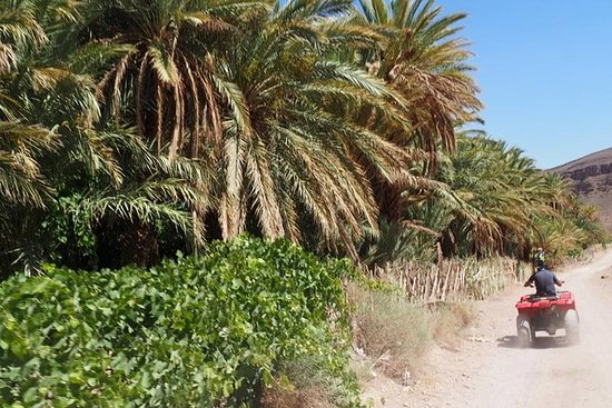 Fint Oasis为期1天的导游四人/沙滩车之旅