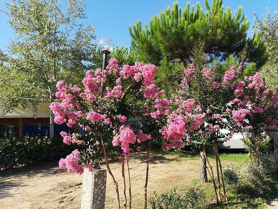 Viareggio, Italien: Fioriture al campeggio