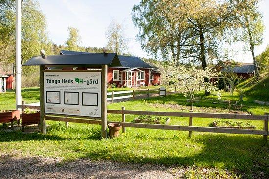 Vargarda, Zweden: På vårt område finns en 4H-gård med fina djur :)