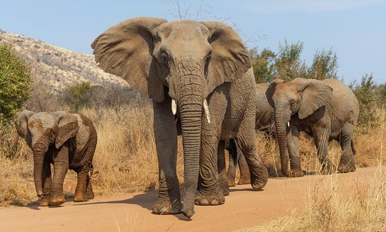 Khakiweed Photographic Safaris: Pilanesberg Elephant