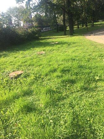 вырубки здоровых деревьев в парке!