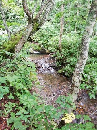 Forest Therapy Road Okushiga Shirakaba Enro Course