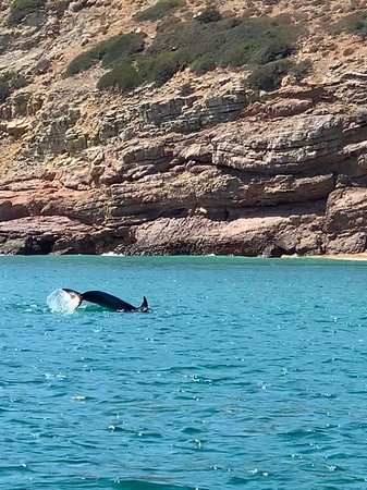 Excursion dauphins - Merveilleux !!