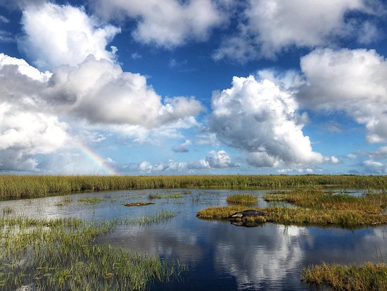 Foto Everglades Airboat Private Nature and History Tour