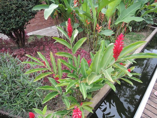another variety of flower along a water channel