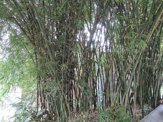 bamboo near water fall