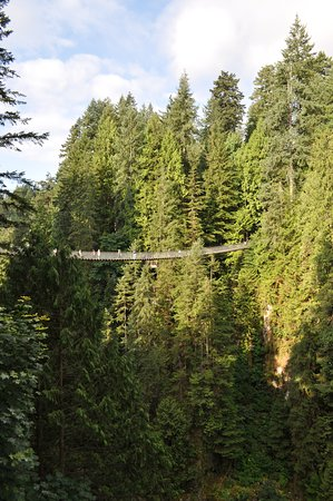 View of the suspension bridge from the Cliff Walk
