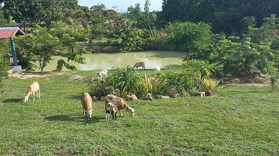 Anton, פנמה: Vista del Lago