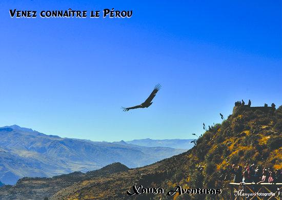 Colca Cañon, Peru: Conoce el Perú...con Xauxa Aventuras