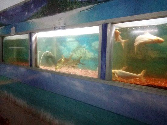 State Aquarium