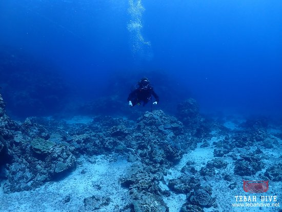 Tebah Dive: Even when reaching the depth of 20m, there is still so many things to see and witness, the corals reef just keep expanding underneath us.