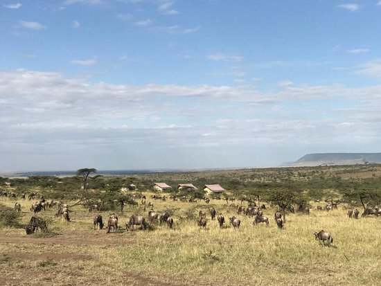 Kandili Camp: Wildebeest around camp