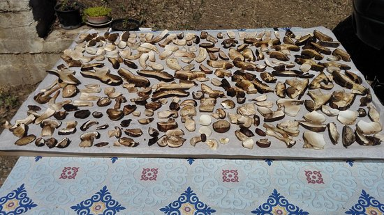 Castelbuono, Italia: funghi secchi