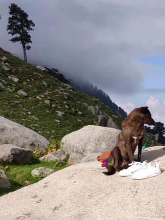 Fagu, India: Day two from triund till snowline and laka  And further to lahesh cave