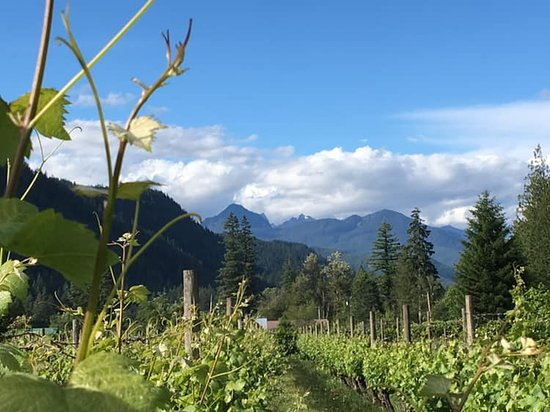 Glacier Peak Winery