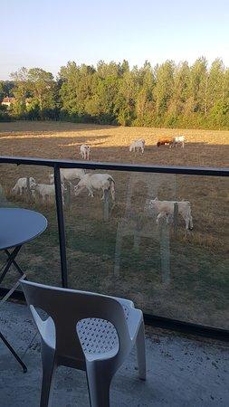 Le Cadusia: Balcon de la chambre sur la campagne, si agréable