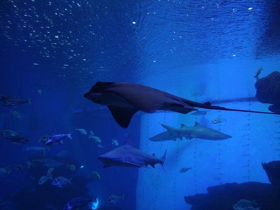 Skip the Line: Palma Aquarium Entrance Ticket: Sehr geschmeidig am gleiten.
