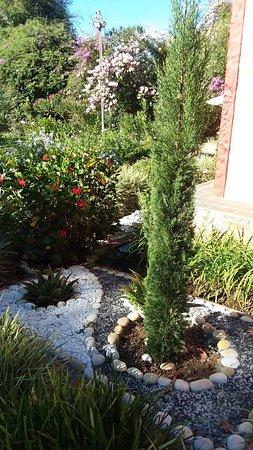 Cabañas La Carolina: plants