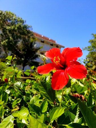Sol Rio de Luna y Mares: Flowers everywhere