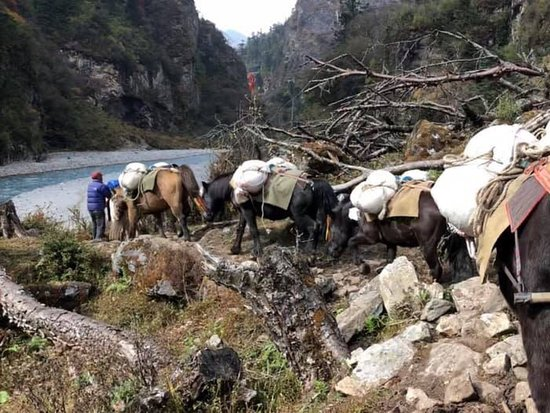 بوتان:  On the way to Laya, one of the remotest high land in Bhutan. The mode of Transportation is pony.