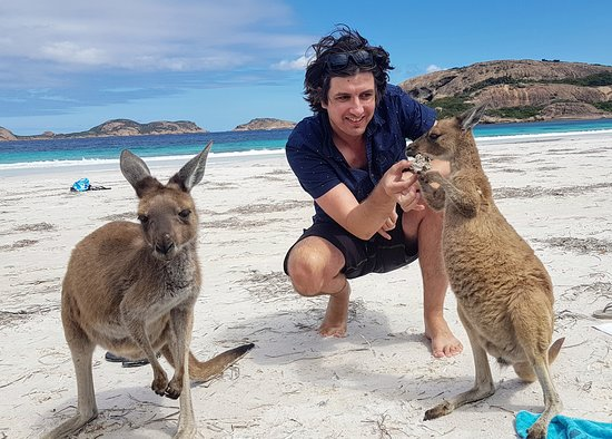Meet the friendly locals at Lucky Bay in Cape Le Grand National Park