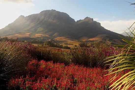 Cape Winelands Stellenbosch Morning Tour