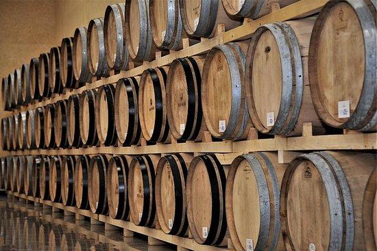 Cata de vinos y tours