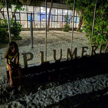 Diffidate dalle imitazioni, Plumeria è il numero 1