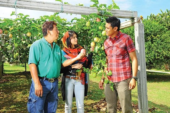 Private Penang Tropical Fruit Farm with Fruit Tasting