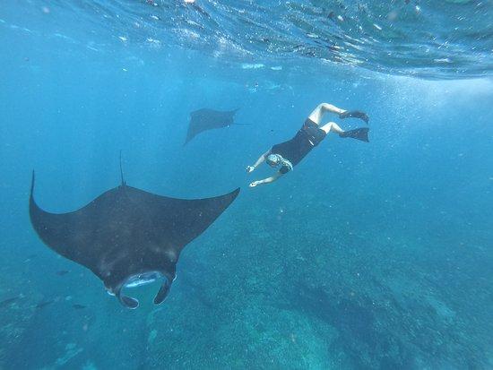 Nusa Ceningan, Indonesia: Snorkeling trip to manta bay, gamat bay and crystal bay