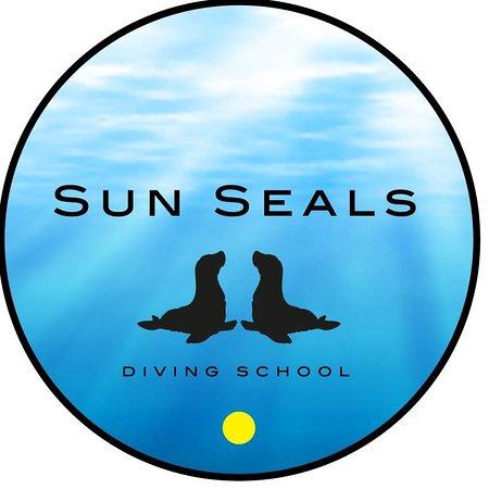 Sun Seals Divers