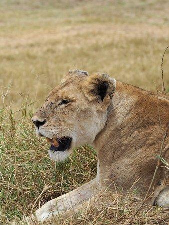 3nights4days lodge Safari