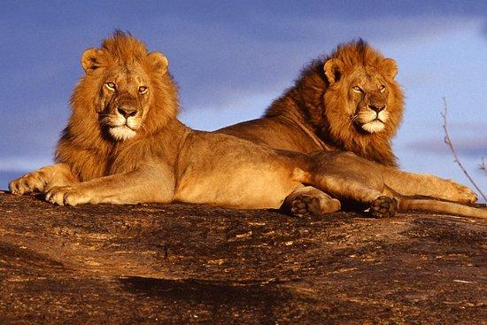 Jambo Travelhouse Safaris