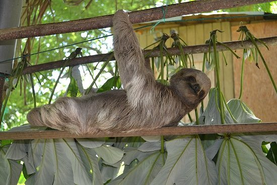 Monkey, Sloths & Iguana Wildlife...