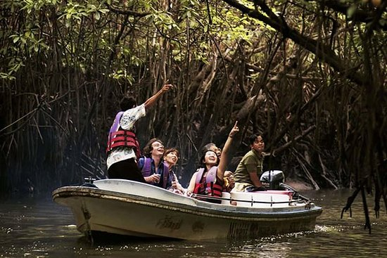 Mangrove Forest Tour In Langkawi