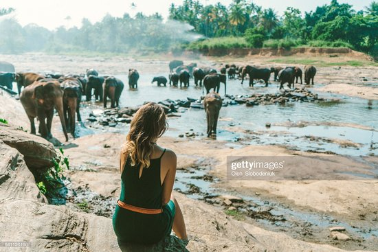 Pinnawala Zoo: pinnawala elephent loge
