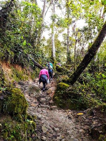 Chirripo National Park 사진