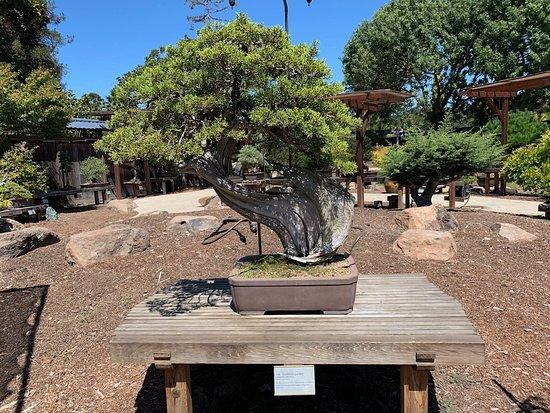 Wondrous Gsbf Bonsai Garden At Lake Merritt Oakland 2019 All You Creativecarmelina Interior Chair Design Creativecarmelinacom